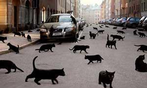 черный кот через дорогу
