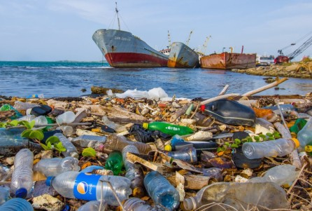 Личинки переваривают пластик